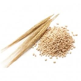 Helt korn (skalat)