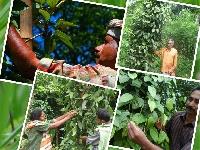 Pds-projekt Kerala Indien